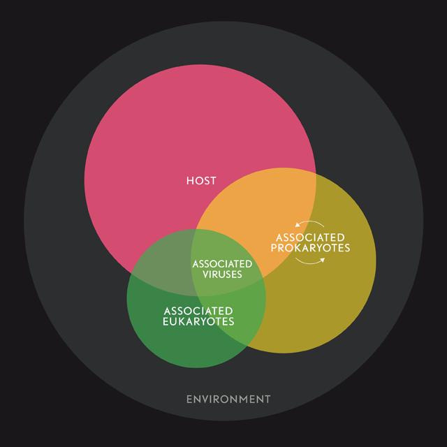 Holobiont Infografik